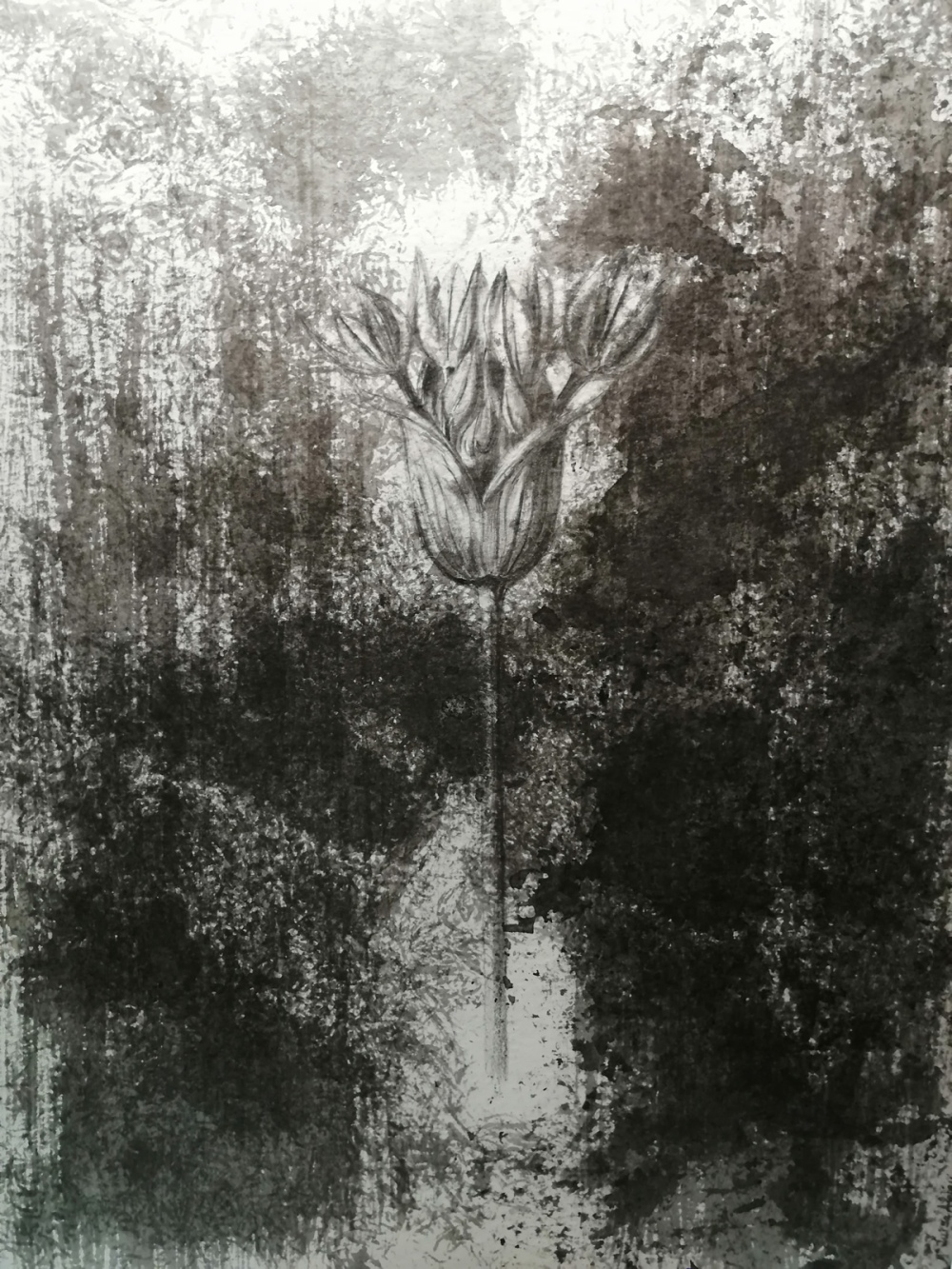 María Luisa Alabau,belenartspace,nature,harmonie,flower,